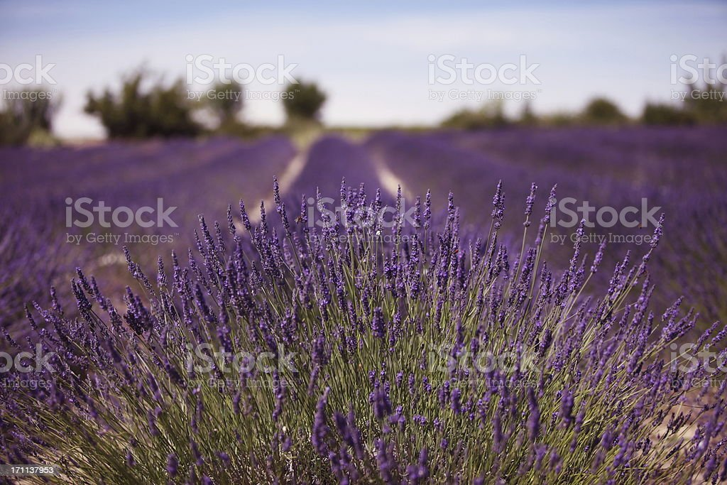 Landscape in Provence...France royalty-free stock photo