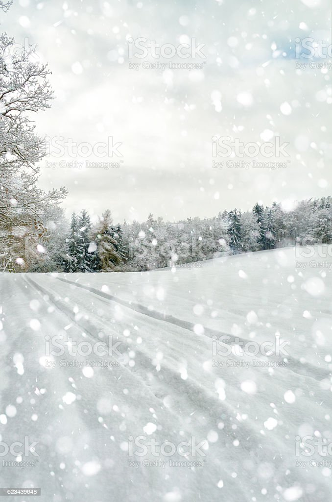 landscape in silent falling snow in winter stock photo