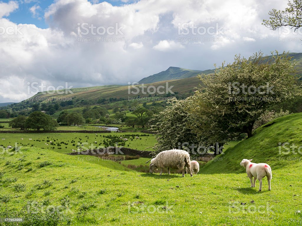 landscape in The Eden Valley, N Yorkshire, Britain stock photo