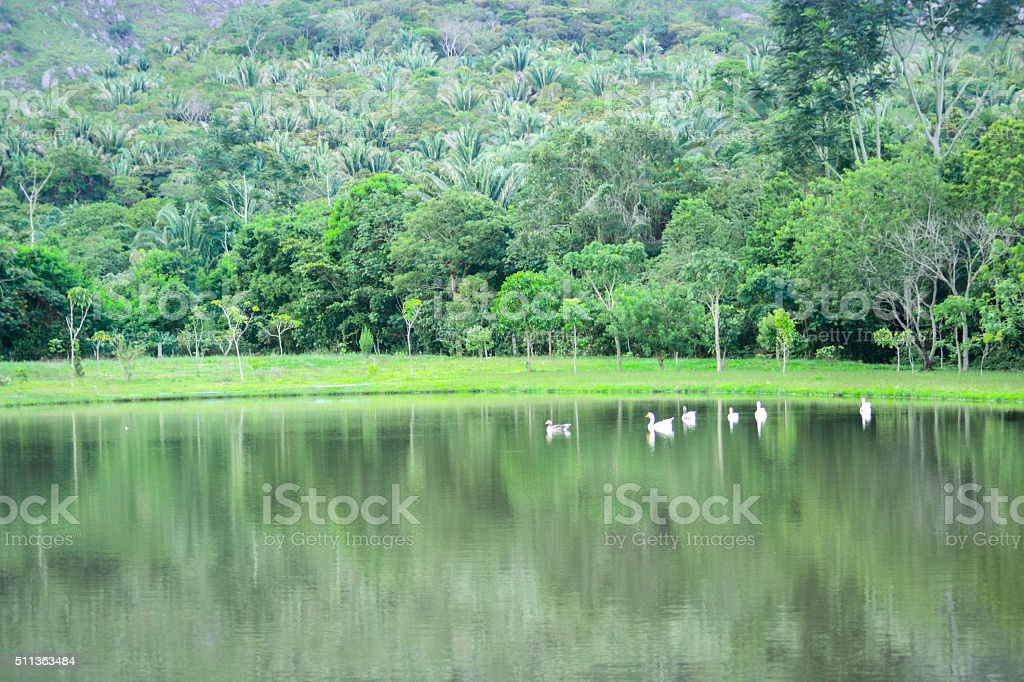 Landscape in the lake. stock photo