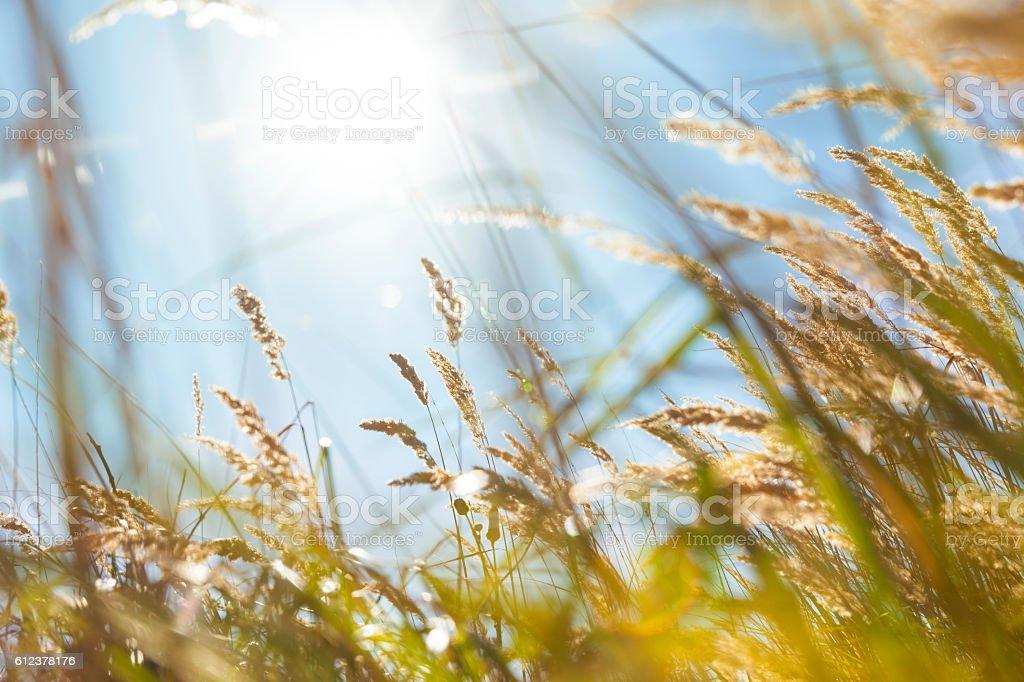 Landscape in the North-Sea area stock photo