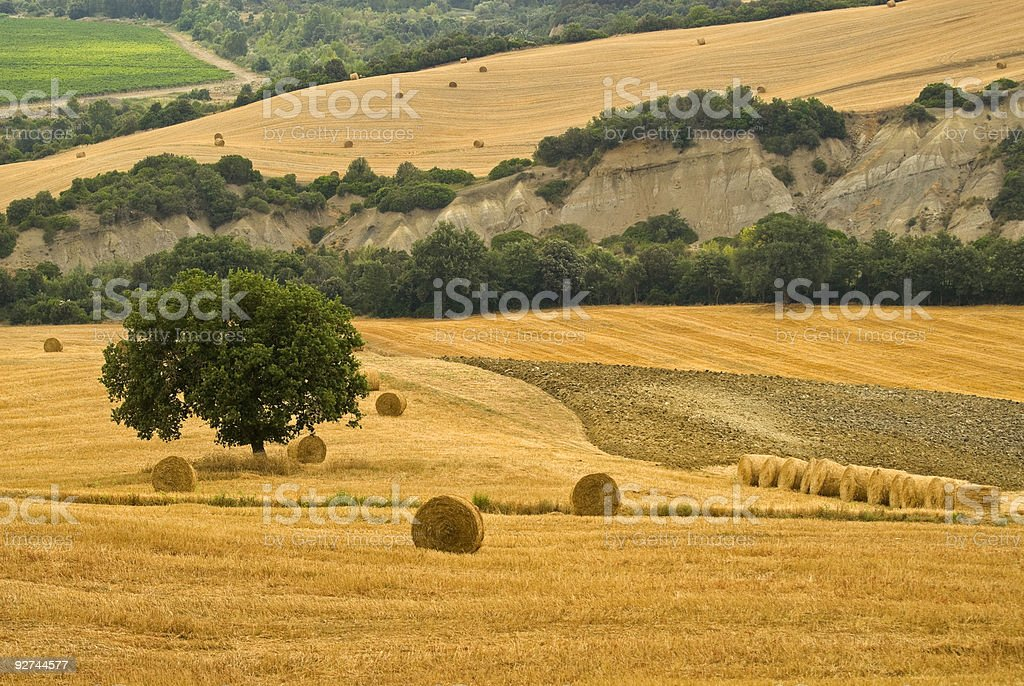 Landscape in Tuscany at summer royalty-free stock photo