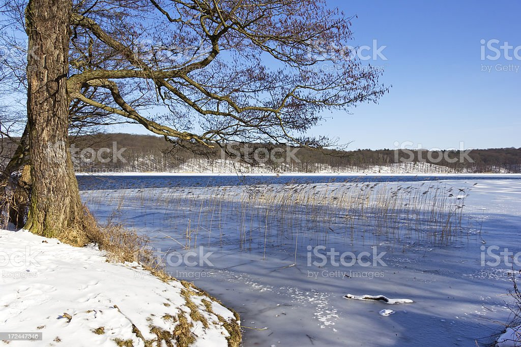 Landscape in Winter, Lake Werbellinsee stock photo