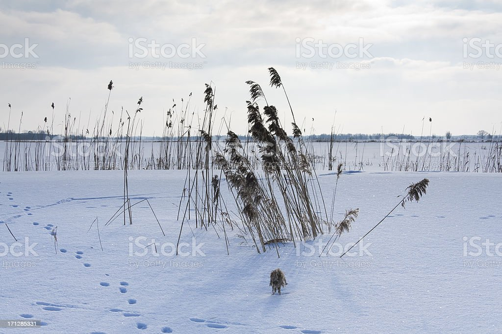 Landscape in Winter royalty-free stock photo