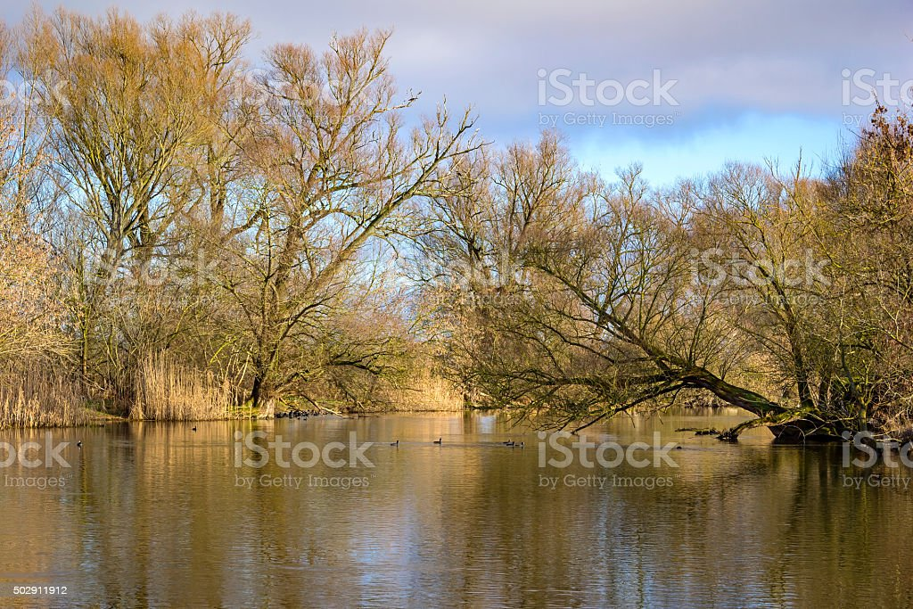 Landscape in Winter stock photo