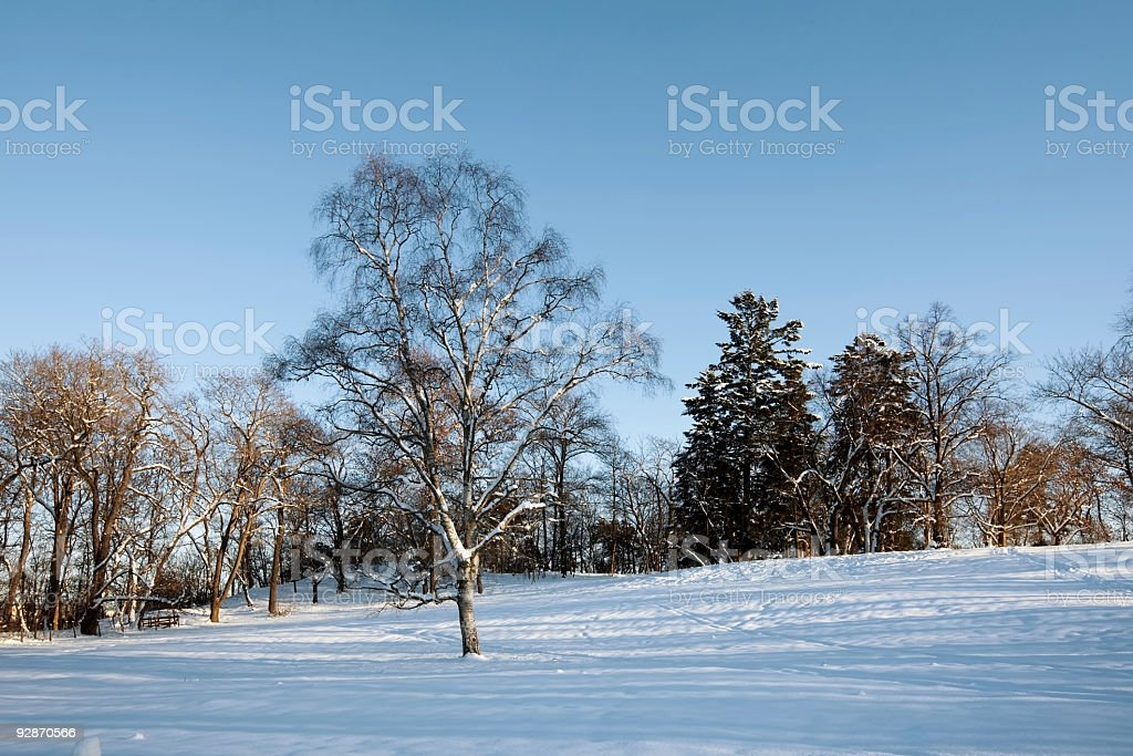 Landscape in winter. stock photo