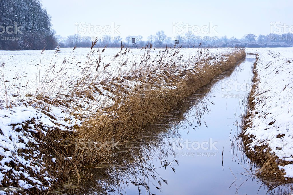 Landscape in Winter with reed stock photo