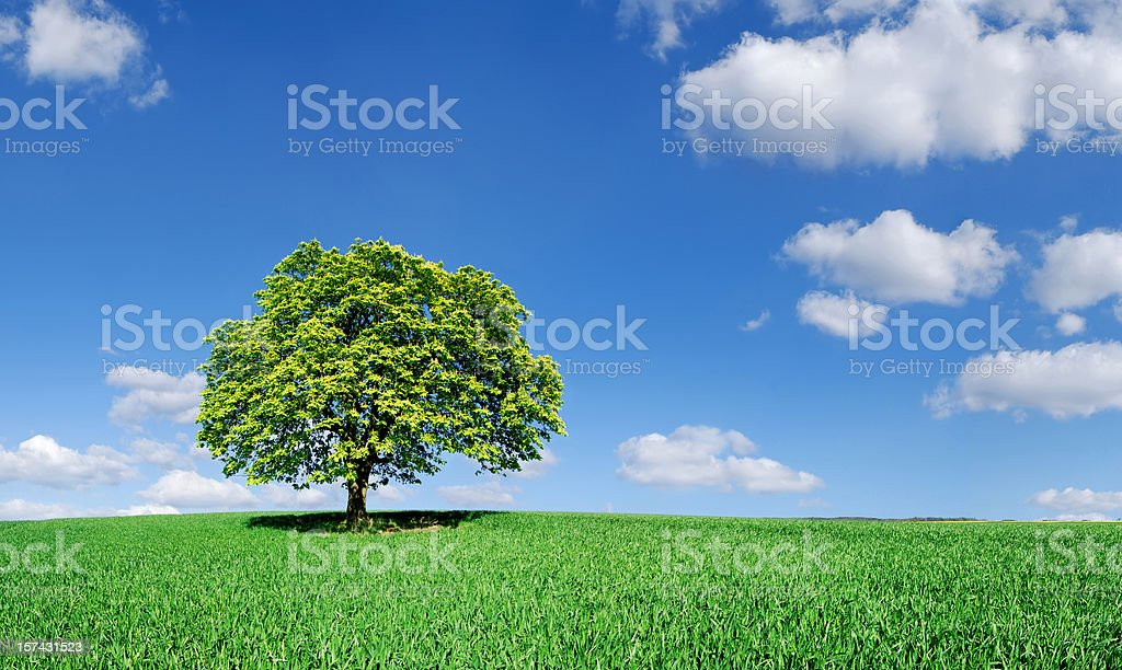 Landscape - Lonely tree on green field royalty-free stock photo