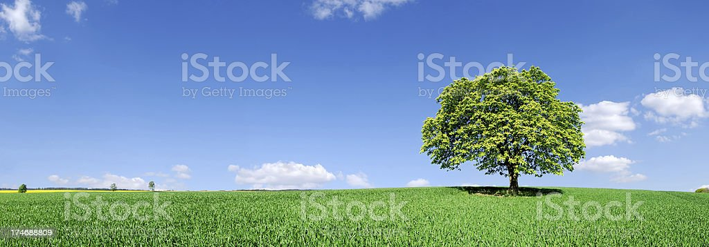 Landscape - Lonely tree on green field stock photo