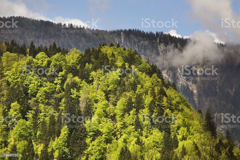 Landscape near Krnica. Slovenia stock photo