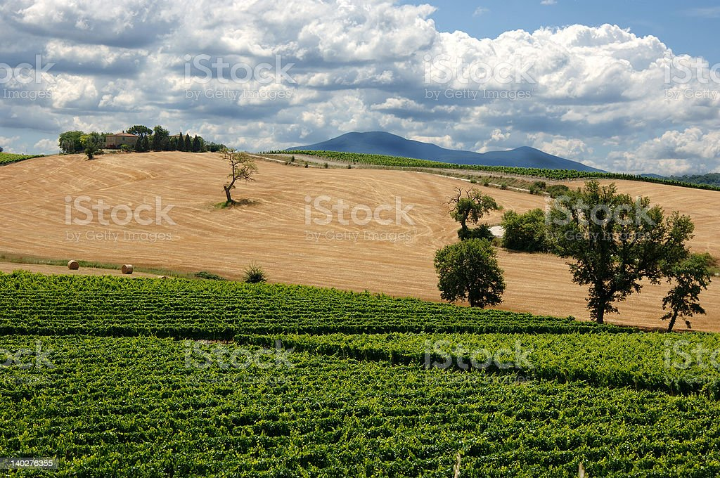landscape near Montalcino (Tuscany) royalty-free stock photo