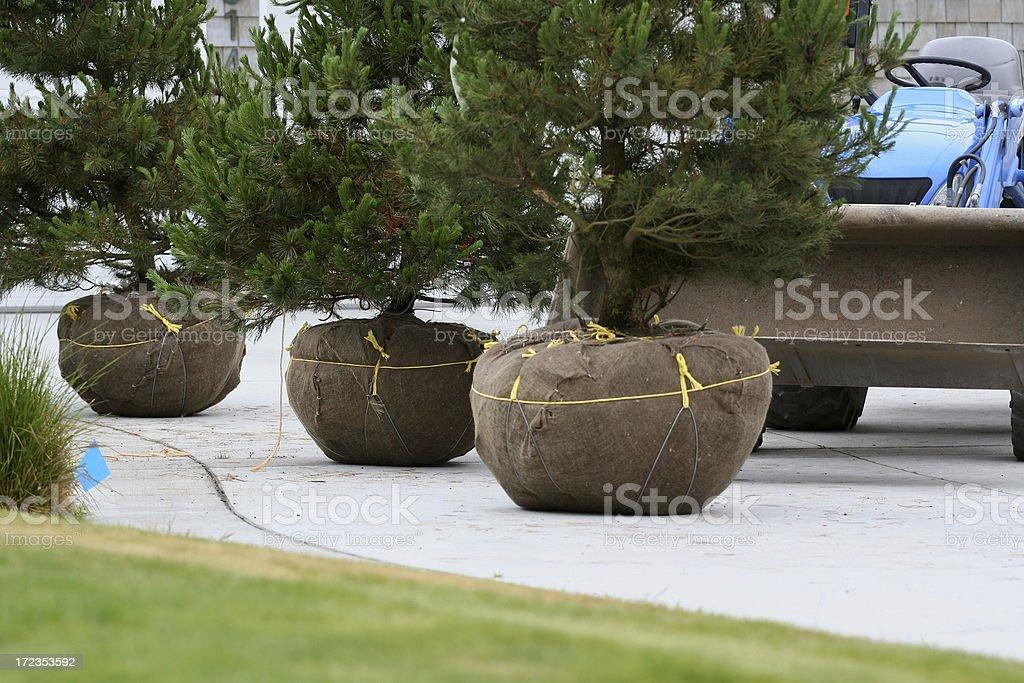 Landscape Nursery Trees royalty-free stock photo