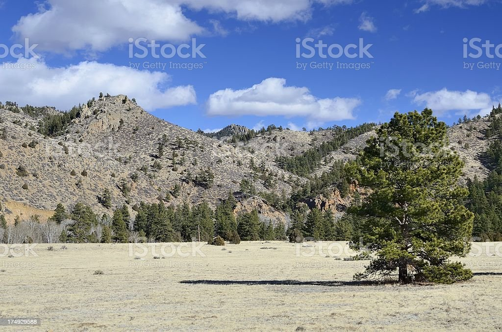 A landscape of a dry scene with trees and mountains royalty-free stock photo