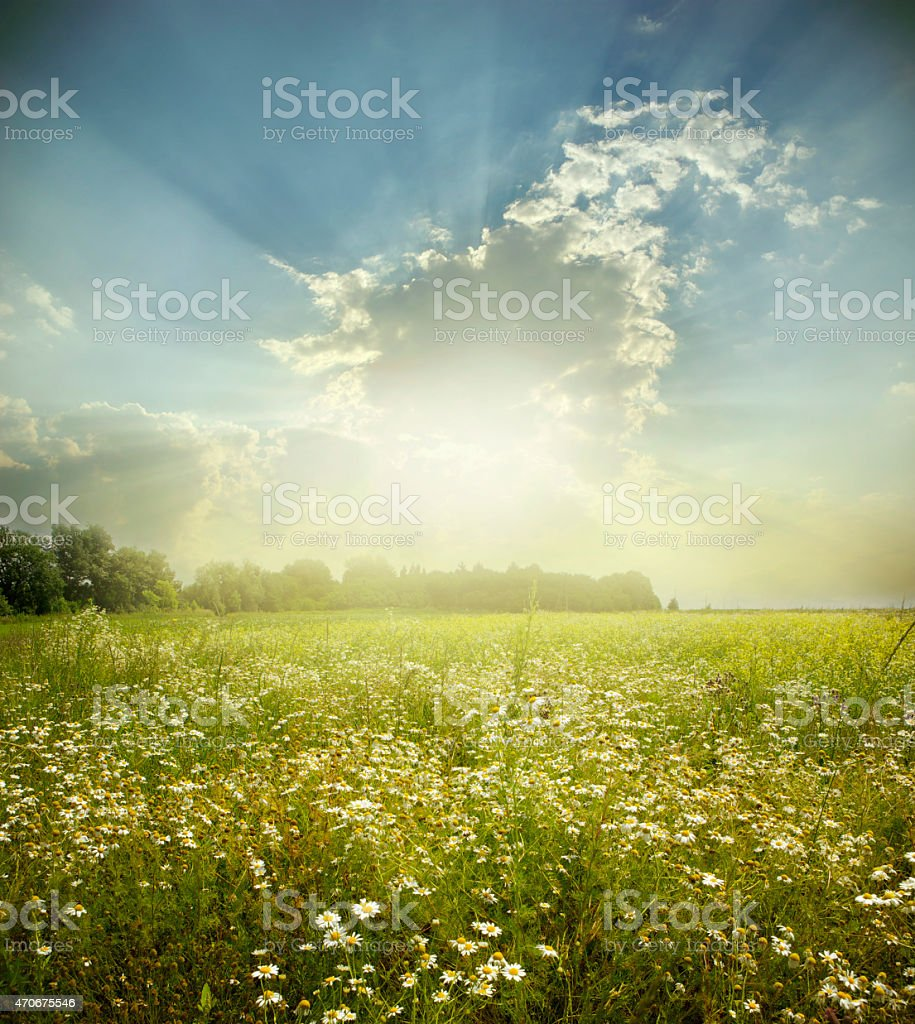 Landscape of a green field receiving the light of the sun stock photo