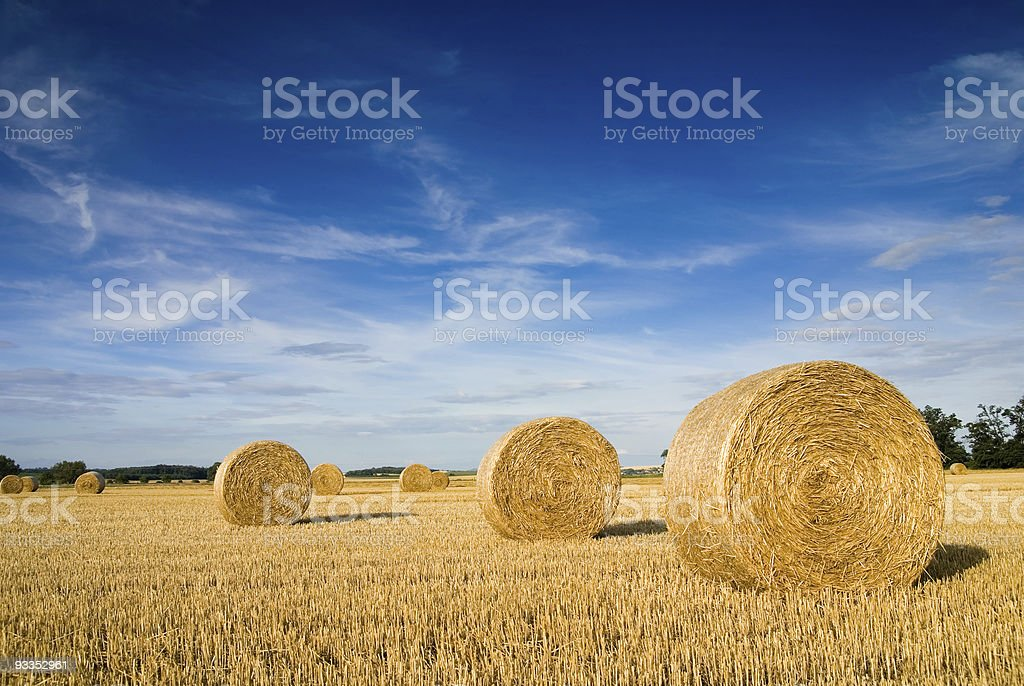 Landscape of a large hay field with numerous straw bales stock photo