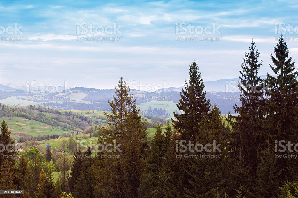 landscape of a mountains with fir-tree and green valley stock photo