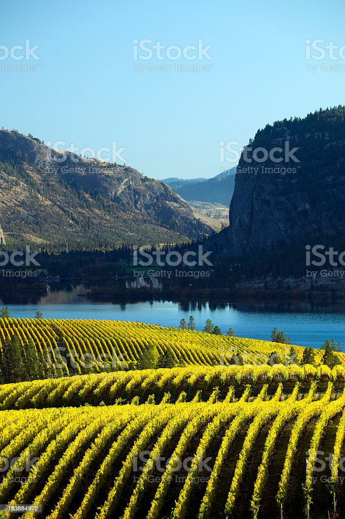 Landscape of a vineyard in okanagan valley McIntyre bluff stock photo