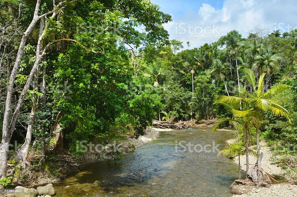 Landscape of a wild stream in Daintree National Park Queensland stock photo