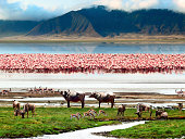 Landscape of African wildlife