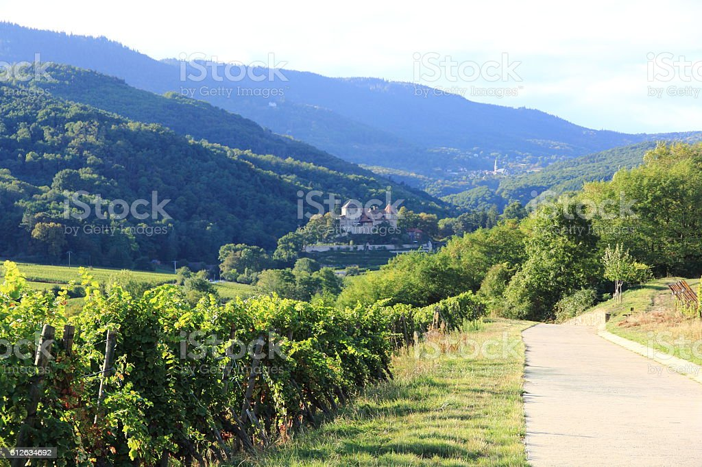 Landscape of Alsace stock photo