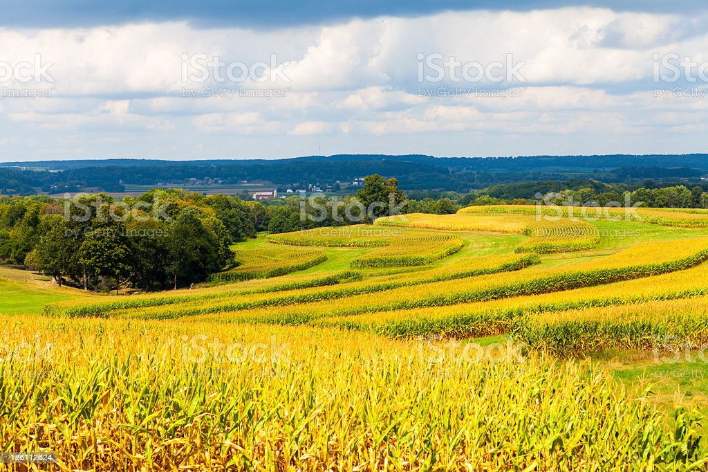 Landscape of American corn field underneath a stormy sky stock photo