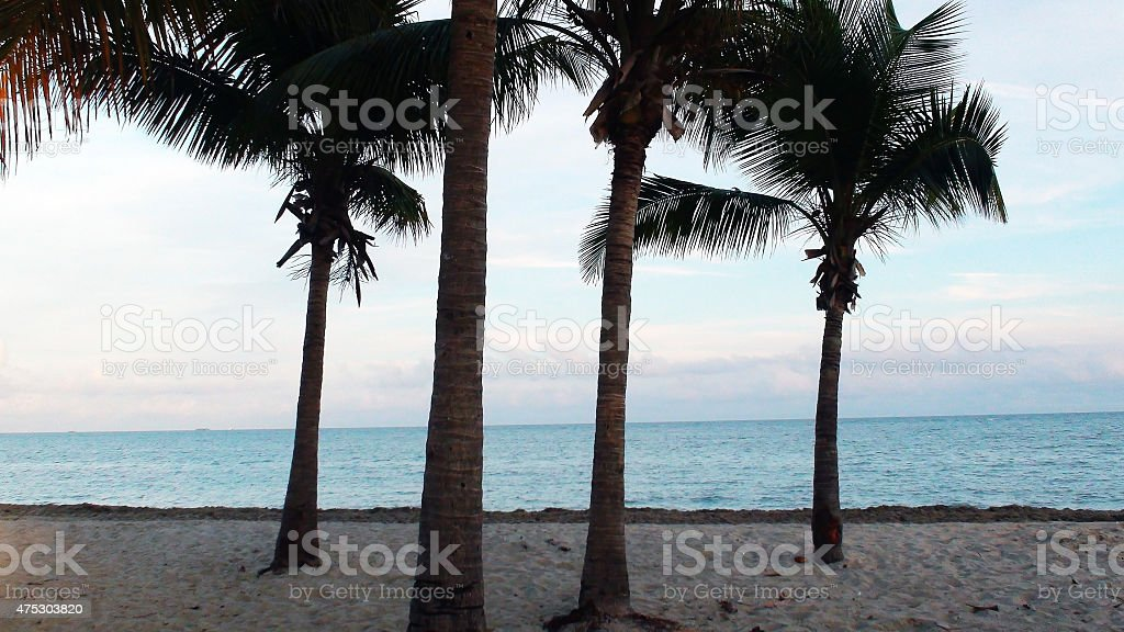 Landscape Of Beach With Palm Trees In Miami Florida,USA stock photo