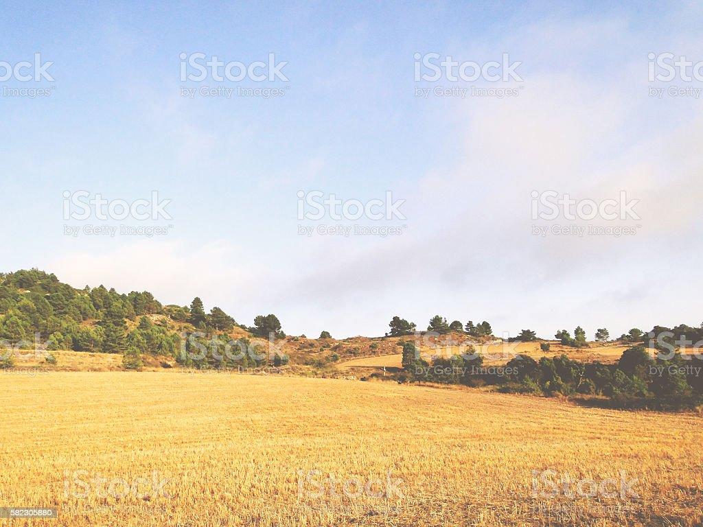 Paisaje de campo de maíz cortado stock photo