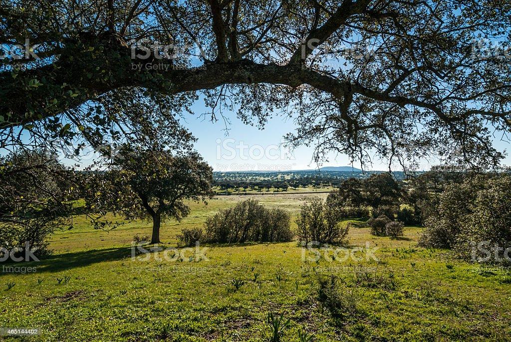 Landscape of Extremadura in Spain, dehesa stock photo