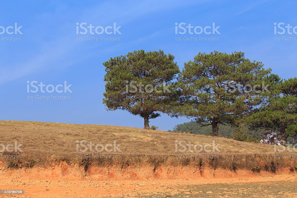 Landscape of forest in DaLat, VietNam royalty-free stock photo