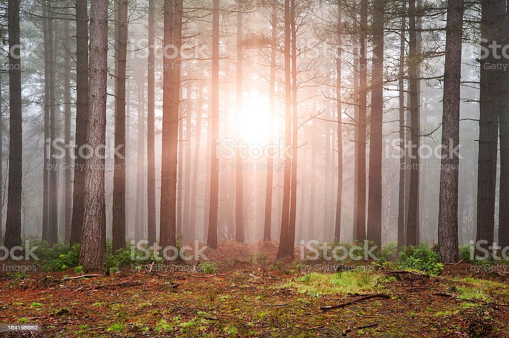 Landscape of forest with sun bursting through trees royalty-free stock photo