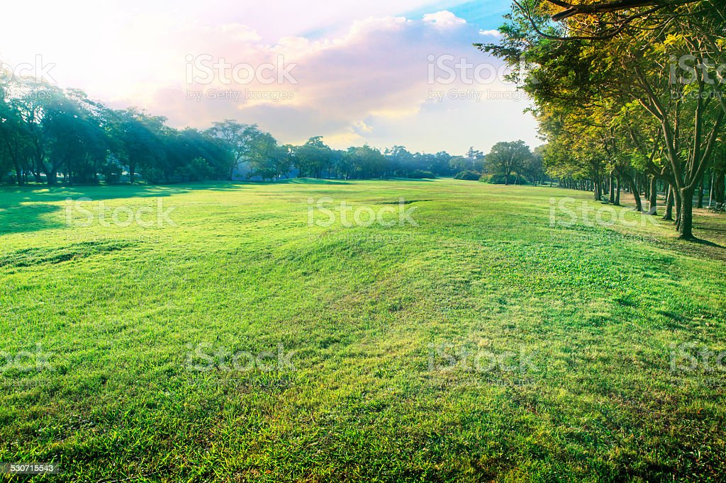 landscape of green environment park stock photo