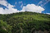 Landscape of  highland forest