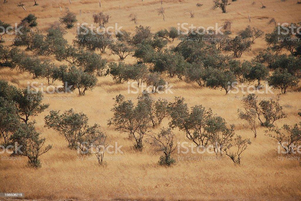 Landscape of Judea Samaria stock photo