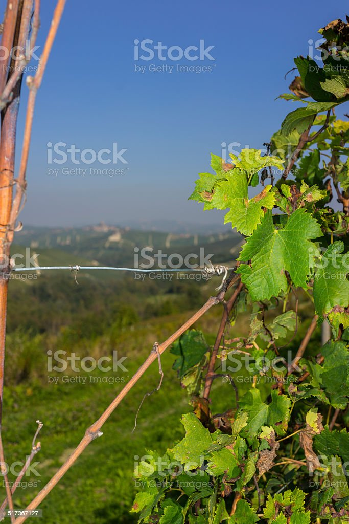 Landscape of Langhe with grapevines (Unesco World Heritage site) stock photo