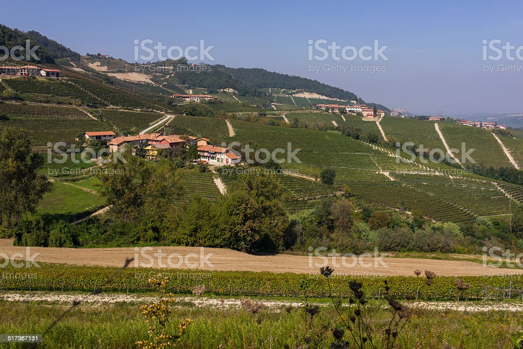 Landscape of Langhe with vineyards (Unesco World Heritage site) stock photo