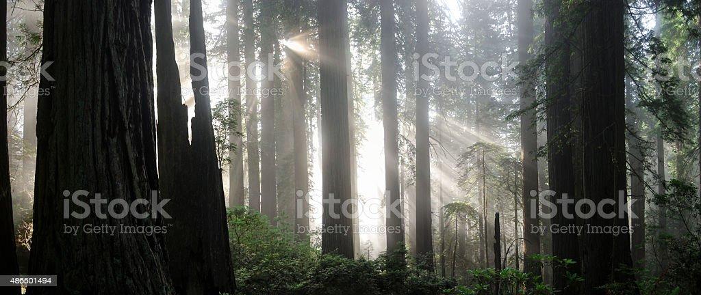 Landscape of Light stock photo