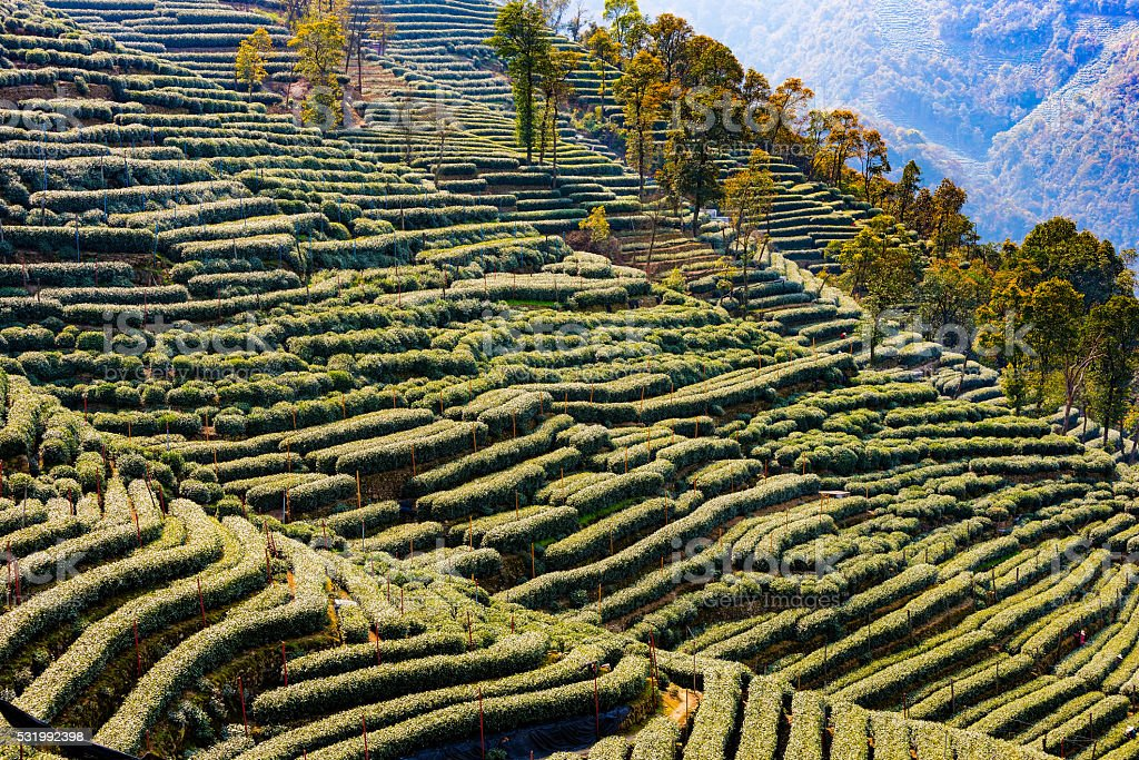 Landscape of Longjing stock photo