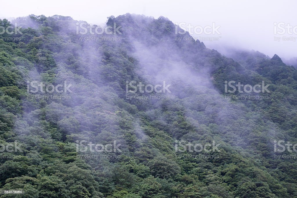 landscape of mountain forest stock photo
