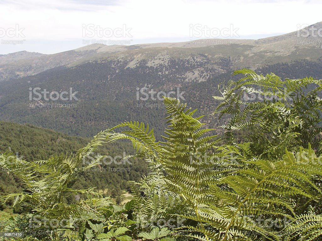 landscape of mountain with ferns royalty-free stock photo