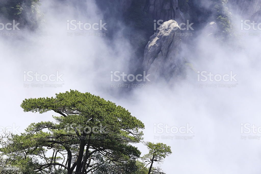 landscape of mountains and pine royalty-free stock photo