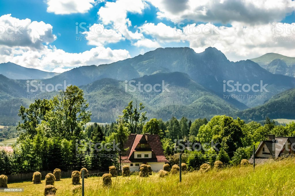 Landscape of mountains. Bundles of hay in the field in mountain village, Gubalowka slope, polish Tatra Mountains in the background, Zakopane, Tatra stock photo