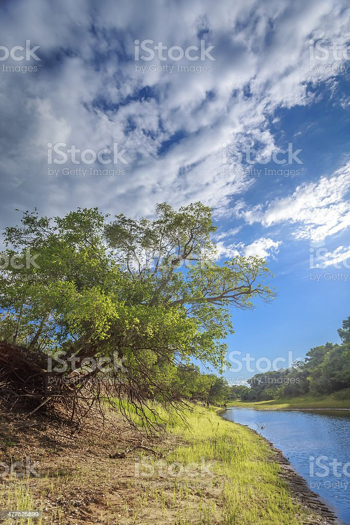 Landscape of Pantanal wetland royalty-free stock photo