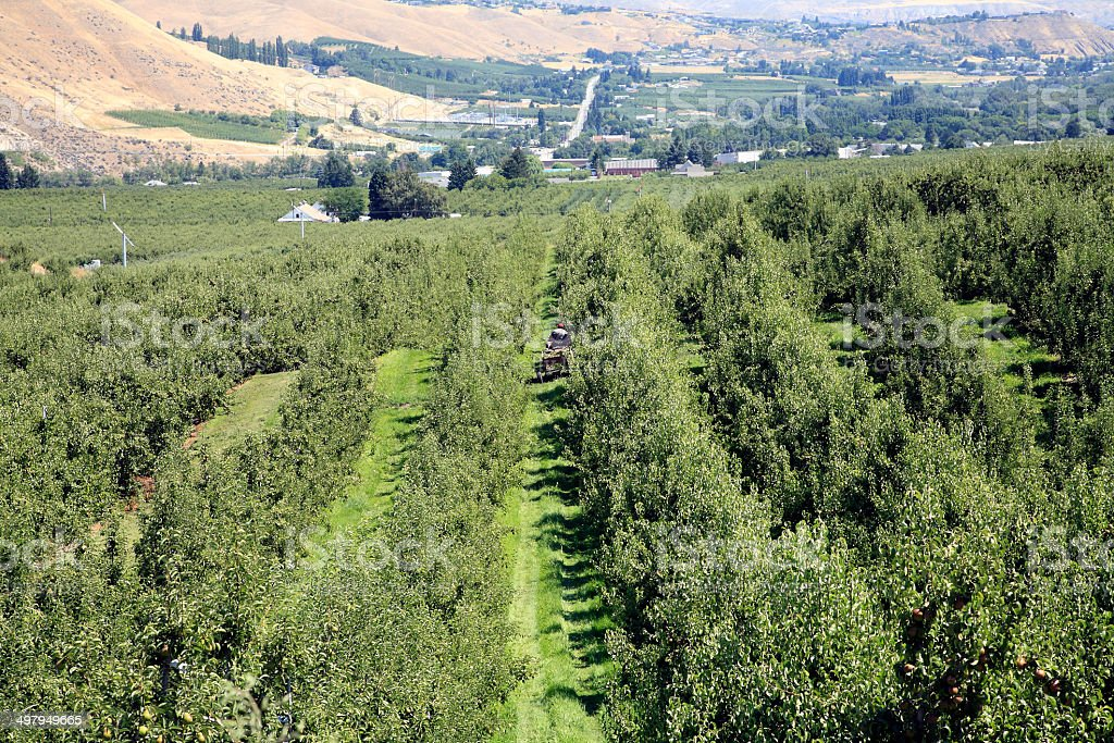 Landscape Of Pear Orchard Wenatchee Washington stock photo