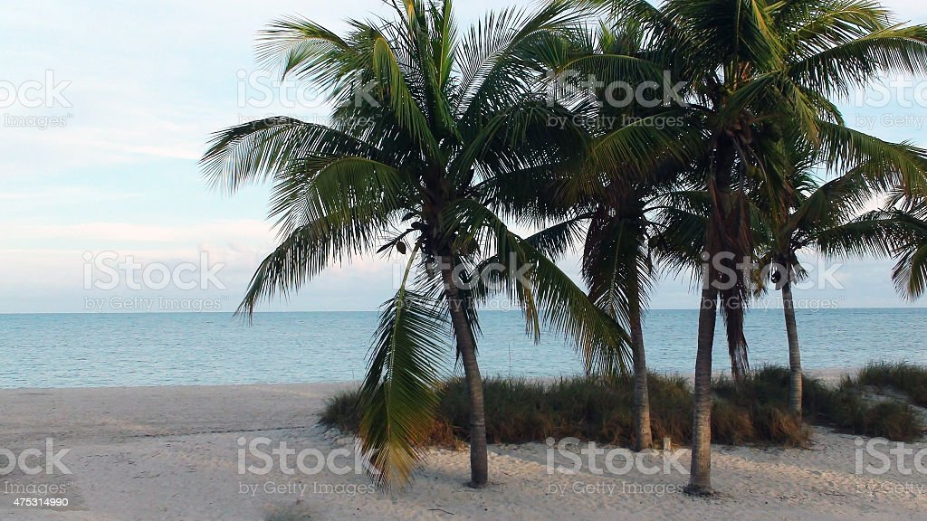 Landscape Of Quiet Beach With Palm Trees In Miami Florida stock photo