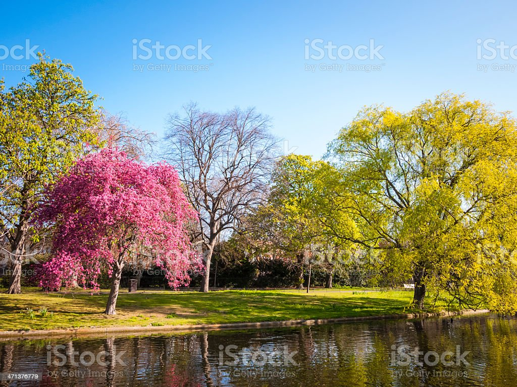 Landscape of Regents Park, London in the Spring stock photo