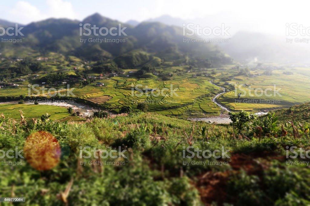 Landscape of rice fields background stock photo