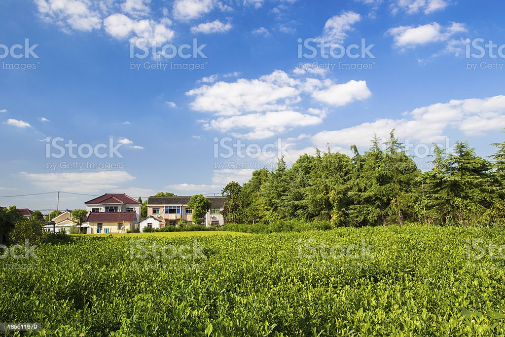 Landscape of Rural Shanghai royalty-free stock photo