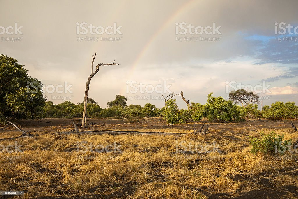 Landscape of savanna with a rainbow, Botswana stock photo
