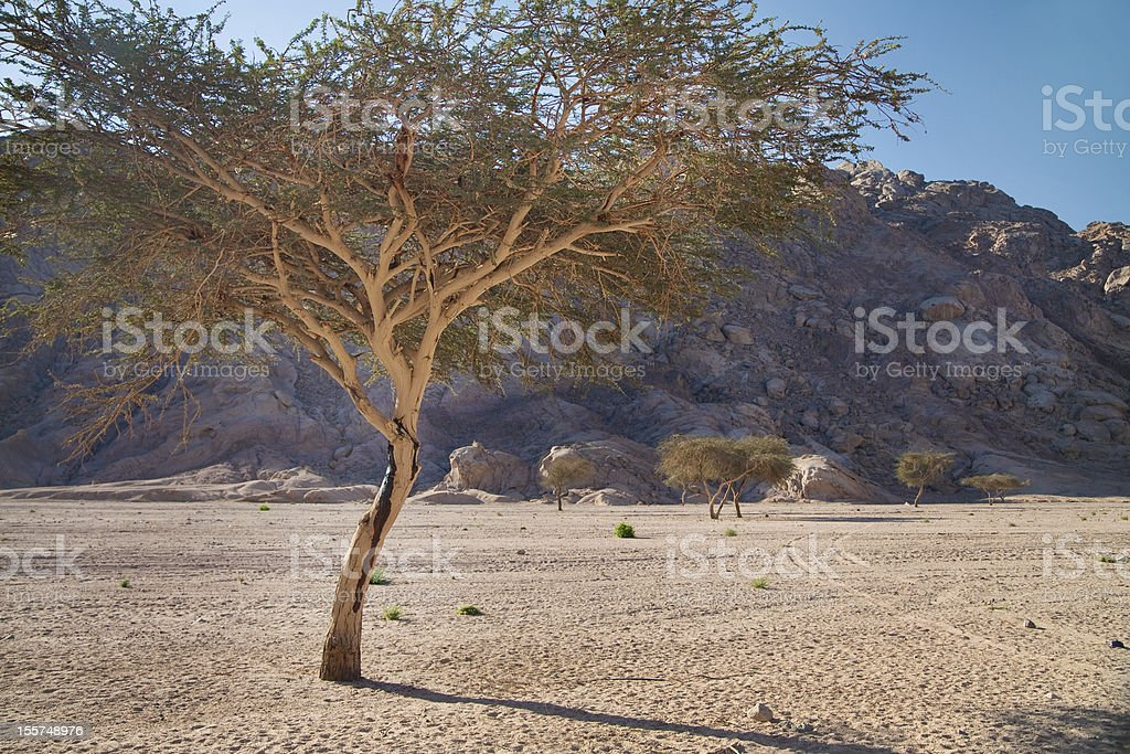 Landscape of Sinai, Egypt, North Africa stock photo