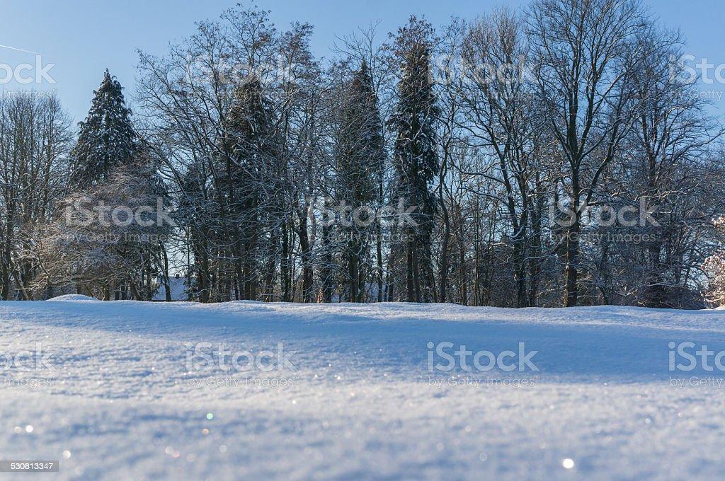 Paesaggio di neve e foreste foto stock royalty-free